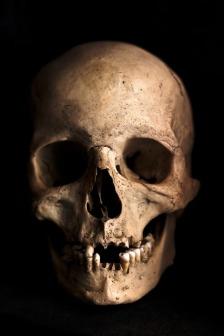 skull-765477_640